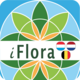 iFlora of Belgium, The Netherlands, and Luxembourg