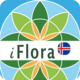 iFlora of Iceland